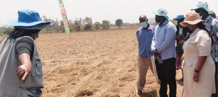 Makonde embraces agric turnaround plan